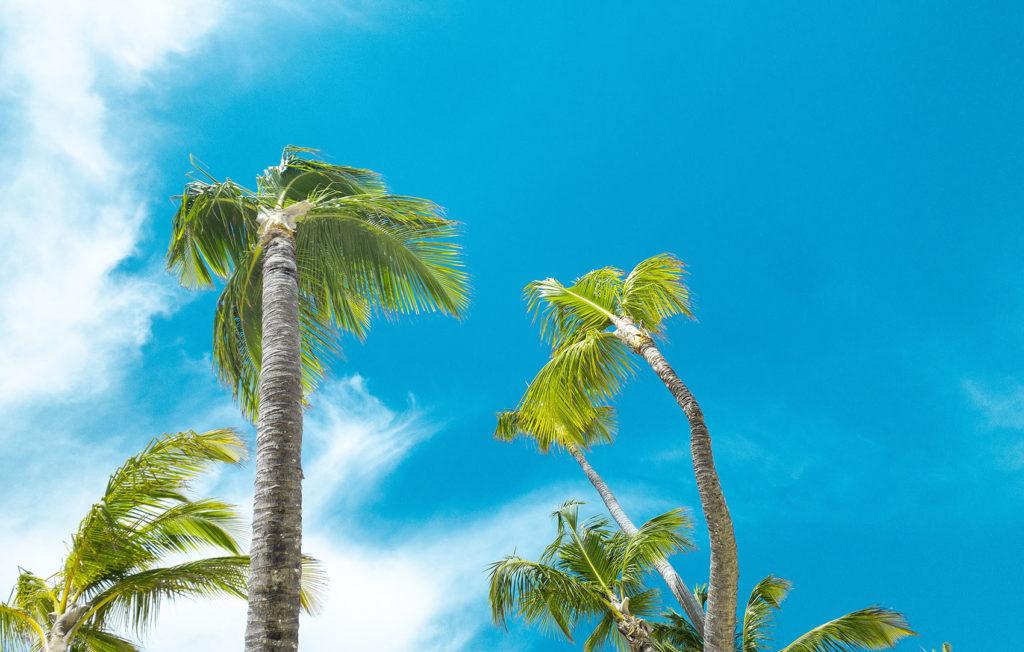 Пальмы и небо на пляже Пунта-Каны