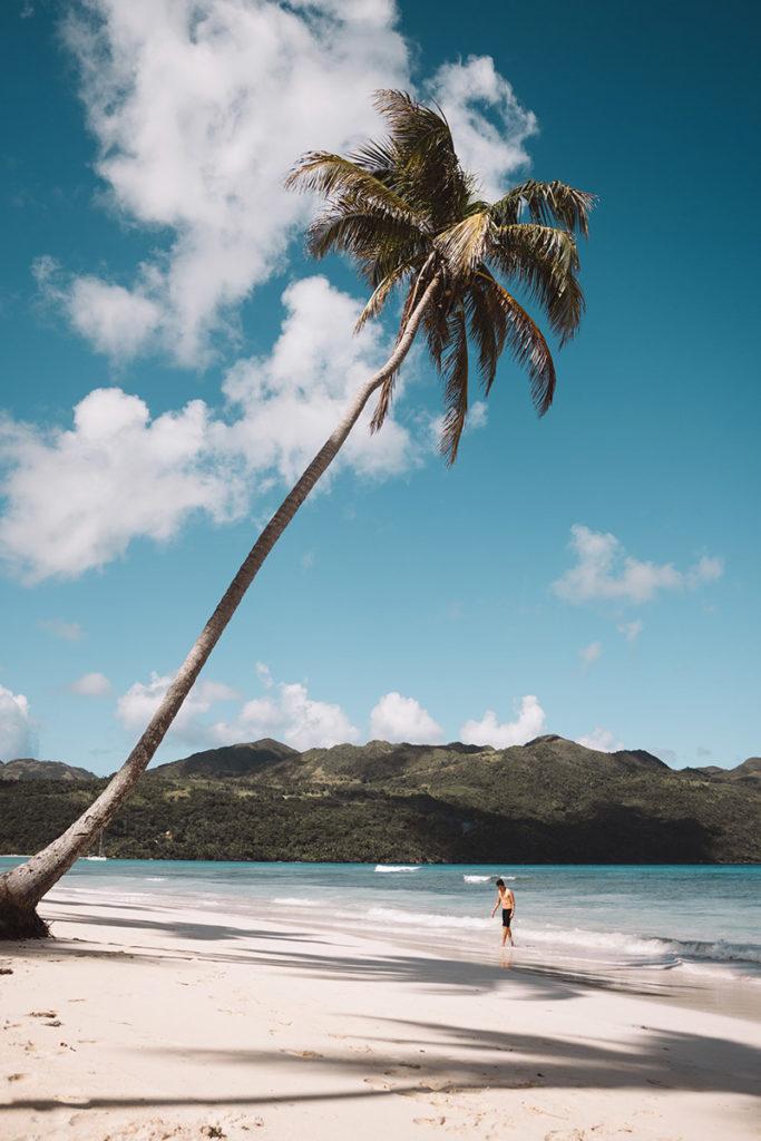Пальма на пляже с белым песком