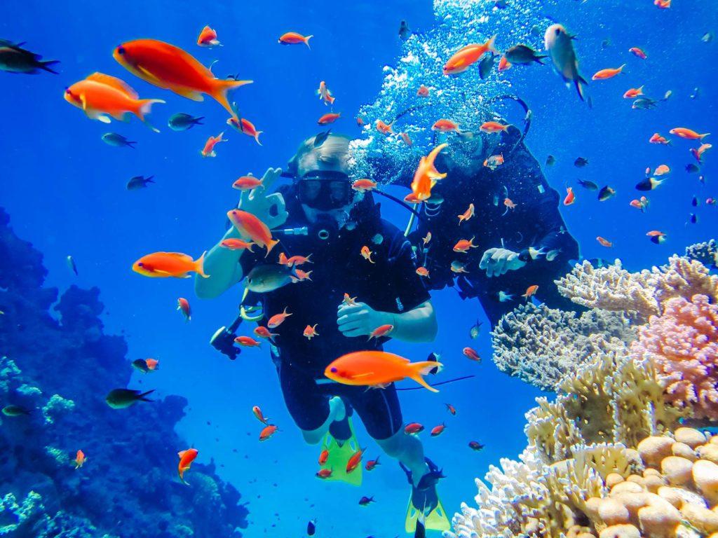 Дайвинг в Красном море Египет